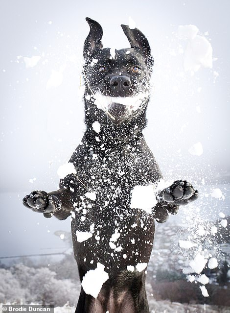 44152-6618807-A_dog_embraces_the_snowy_conditions_on_a_hill_in_Loch_Lomond_nor-a-8_1548182134804.jpg