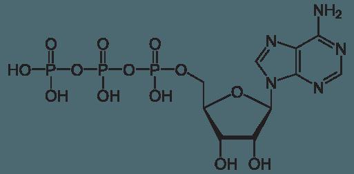 513px-Adenosintriphosphat_protoniert.svg.png