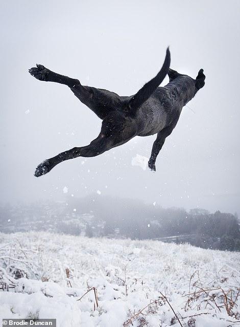 8844154-6618807-A_dog_in_the_snow_of_Loch_Lomond-a-9_1548182134804.jpg