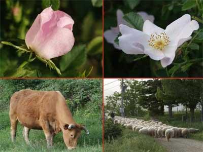flora-fauna.jpg