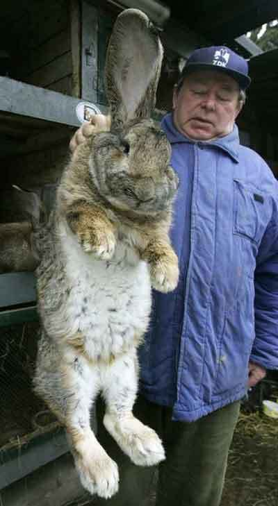 giant-rabbit1.jpg