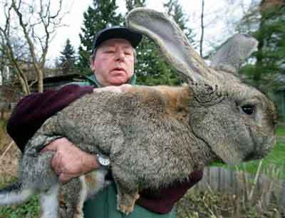 giant-rabbit2.jpg