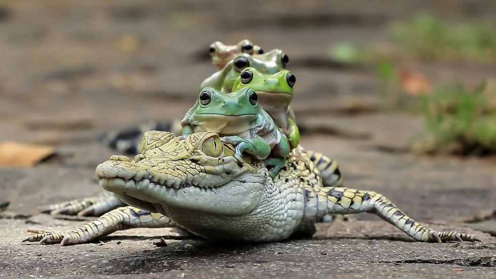 mdrum_frog_conga-1_0.jpg