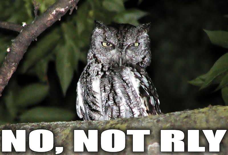 No_not_rly_owl.jpg