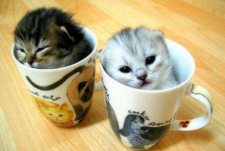 polar-kittens.jpg