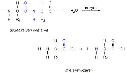 rct-hydrolyse-eiwit.jpg