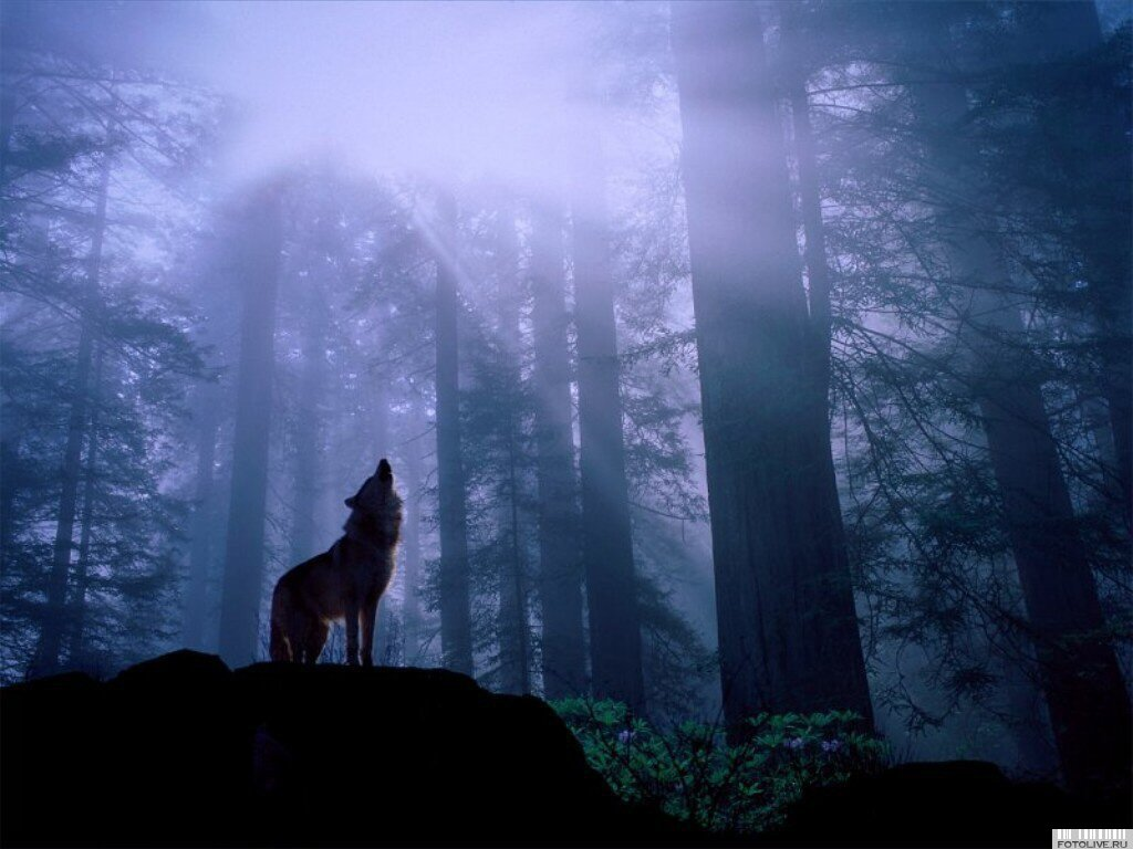Wolf_howling_at_moon.jpg